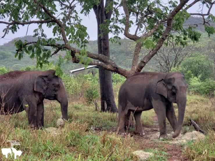 Maia-e-Guida-estão-curtindo-bastante-as-chuvas