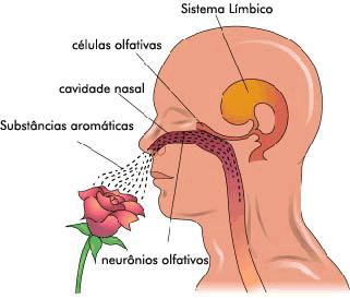 sistema-olfativo